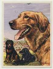 Nº 9 bmx card image dogs dogs annees 50s
