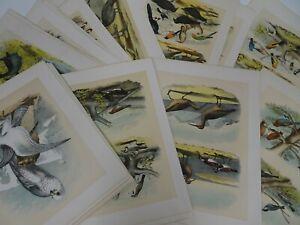 Lot 55 1878 Chromolithograph Plates from Studer Ornithology Birds North America