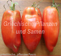 🔥 🍅 Tomate SCATOLONE 2 Flaschen-Tomaten Riesenfüchte 10 frische Samen Balkon