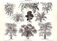 1890 FLOWER Leaf Plants Screw Pine Rhapis Anthurium Antique Engraving Print