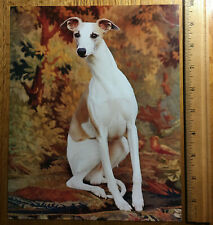 """Whippet - Color Print 8"""" x 10"""" - ready to be framed - Photography Life Magazine"""