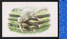 Albino Red Squirrel Mammals Hand Colored Antique Print