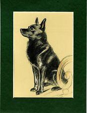 Lucy Dawson  ~ Schipperke ~  Colour Print Genuine Vintage 1937