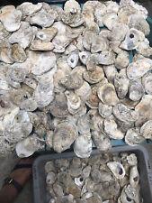 Bulk Oyster Shells