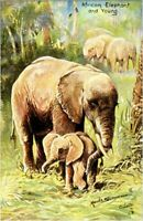 African Elephant & Young Raphael Tuck & Sons postcard In The Jungle Oilette