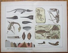 SCHUBERT: Large Plate Paleontology Fossil Dinosaur - 1890