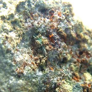 Olivenite Ting Tang Mine Carharrack Cornwall UK Mineral Specimen