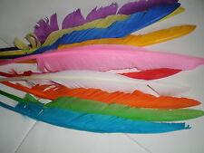 lot de 10 plumes 35 cm oie mixte couleur