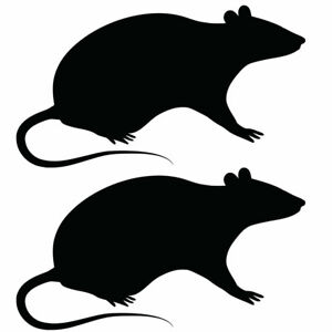 Qty 2 Rat/Mouse Stickers Car Window Wall Decals Any Colour III 10cm - 50cm