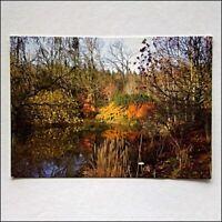RHS Garden Rosemoor 2008 Postcard (P432)