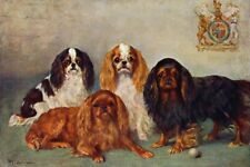 Cavalier King Charles Spaniel Dog 1860 - 8 Large New Blank Note Cards