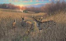 Michael Sieve Harvest Time Deer Buck Print Signed and Numbered with Certificate