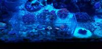 Coral box Shroom Box Mushroom box Aquatic Guyz AG-SB