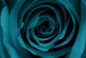 Teal Rose CANVAS WALL ART DECO LARGE READY TO HANG all sizes