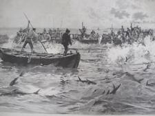 ENGRAVING 1897 FISHING FOR TUNA IN MEDITERRANEAN