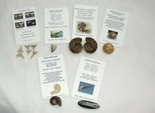 Fossil Gift Box Educational Lot  Ammonite,Shark Teeth, Mosasaur Dinosaur  Real