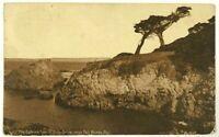 The Ostrich Trees 17 Mile Drive Del Monte California CA Sepia 1900's Postcard