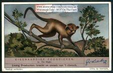 Madagascar Maki Lemur Primate Madagascar 1930s Trade Ad Card