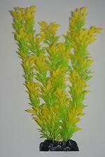 Aquarium Plant Rose Leaf Yellow and Green Leaf Plant 40cms High