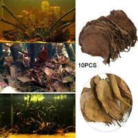 10Pcs Indian Almond Catappa Leaves Fish Aquarium Improve Quality Water Best J0W0