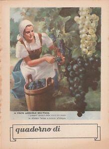 QUADERNO  1940-1950 IL VOLTO AGRICOLO DELL'ITALIA -Q89