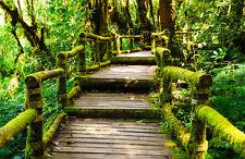 Fototapete Brücke durch den Urwald Nr. 486 Größe: 400x280cm Wald Tapete Brücke
