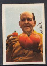 FKS World Record Breakers 1980 Sticker - No 41 - Largest Tomato (S726)