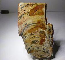 Stromatolite. Microbial, Pre Cambrian. Mount Isa. Queensland, Australia.    S126