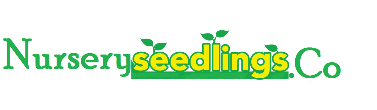 DRILLSTORE NURSERY PLANT SEEDLINGS