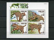 Sierra Leone 2015 MNH Tigers 4v M/S Tiger Wild Animals Fauna Stamps