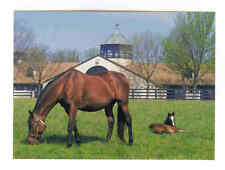 MARE & FOAL AT BEAUTIFUL GAINSBOROUGH THOROUGHBRED HORSE FARM LEXINGTON KY PC