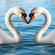 Swans Love Heart 3D Lenticular Birthday Greetings Card ALVL5004