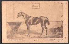 Hippisme. Cheval de course - Magenta. Photographe Barenne. Vers 1870. CDV