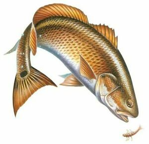 Redfish Car Magnet Rivers Edge Art Fishing Wildlife Decal Truck Angling Outdoors