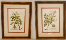 PAIR of Framed REPRODUCTION Antique Botanical Prints ornate Framed and Matted