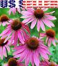 100+ ORGANICALLY GROWN Echinacea Purpurea Purple Coneflower Seeds Healthy Herb !