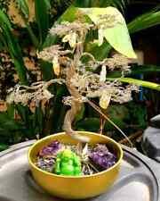 Bonzai Tree of Prosperity