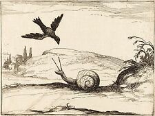 JACQUES CALLOT FRENCH CROW SNAIL OLD ART PAINTING POSTER PRINT BB5746A