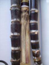 Sugar Cane Varieties Sugarcane Stick 4 Healthy Sticks Minimum 2 nodes Each
