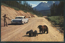 MT Glacier National Park CHROME c.70 MOTHER BEAR & CUBS Begging CARS Logan Pass