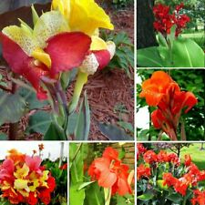 5pcs Canna Flowers Seeds 10 Type Plants Nice Smell Beautiful Garden Home Potted