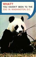 Vintage Postcard - Panda Bear Enjoying A snack At The Washington DC #2089