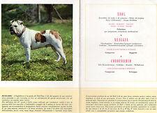 STAMPA PUBBLICITARIA FARMACIA MAESTRETTI 1956 CANE BULL DOG