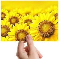 """Yellow Sunflower Field Garden Small Photograph 6""""x4"""" Art Print Photo Gift #14605"""