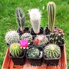 Lot de 6,12 ou 18 cactus en pot de 8,5 cm