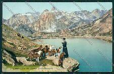 Aosta San Bernardo Cane cartolina QQ6078