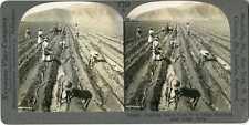 Peru ~ LIMA ~ Planting Sugar Cane Sugar Hacienda Stereoview 21868 T254 20083 fx