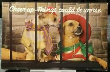 1950's Cute Chihuahua DOGS Dressed as Human in Prison Anthropomorphism Postcard