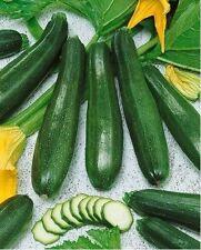 Black Beauty Zucchini Squash Summer 20 Seeds Heirloom Prolific Spineless Green