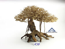 Bonsai Driftwood Avatar Movie Mother Tree International Shipping -Size L- AC717